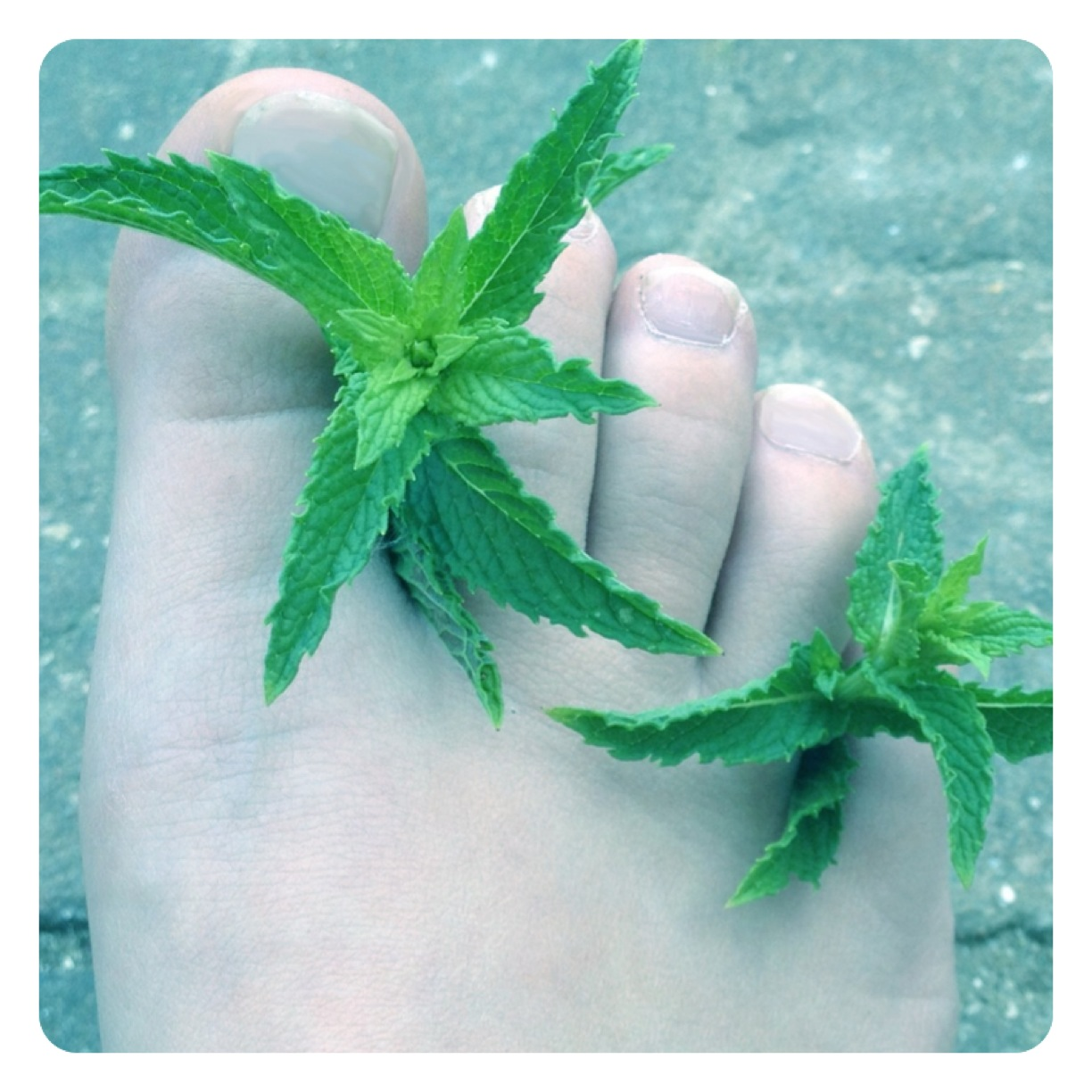 DIY Minty Foot Scrub